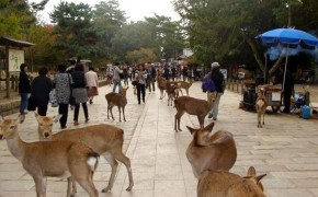 Deer in Japan's Nara Prefecture are Messengers of the Gods