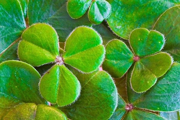 7 Myths About St. Patrick's Day