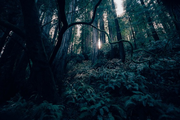 dark places forest trees - photo #13