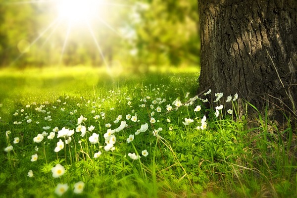 Flowers Meadow Wood Spring Sun Tree Forest