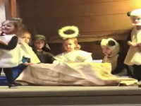 Mary Fights Sheep Over Jesus in Nativity Play