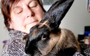 Is A Cross Appearing on Bunny's Head A Miracle?