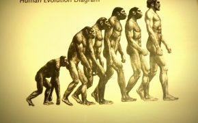 Human Evolution Exhibit Censored to Avoid Offending Ultra-Orthodox Jews