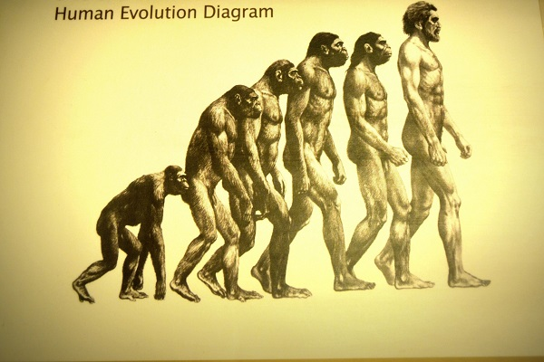 Human Evolution Exhibit Censored To Avoid Offending Ultra