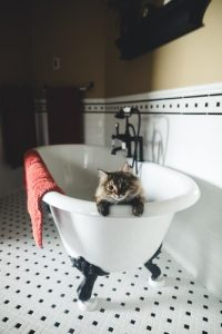 Bathtub Photo by Brad Pearson on Unsplash